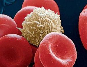 Как обозначаются лейкоциты в анализе крови