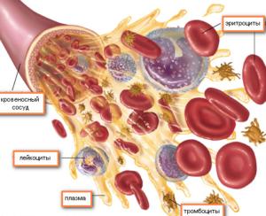Какая норма эритроцитов в крови у детей разных возрастов