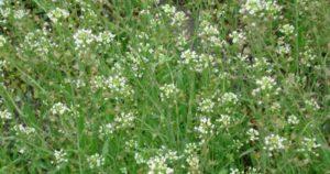 Какие кровоостанавливающие травы можно использовать