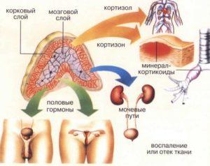 норма кортизола в крови у женщин