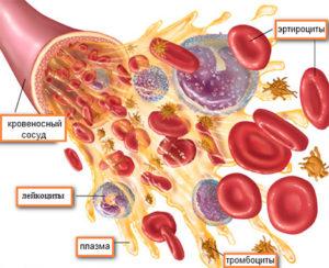 организме отвечают лейкоциты в крови